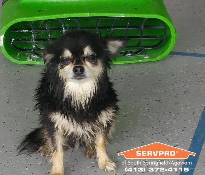 SERVPRO of South Springfield/Agawam is Pet Friendly!