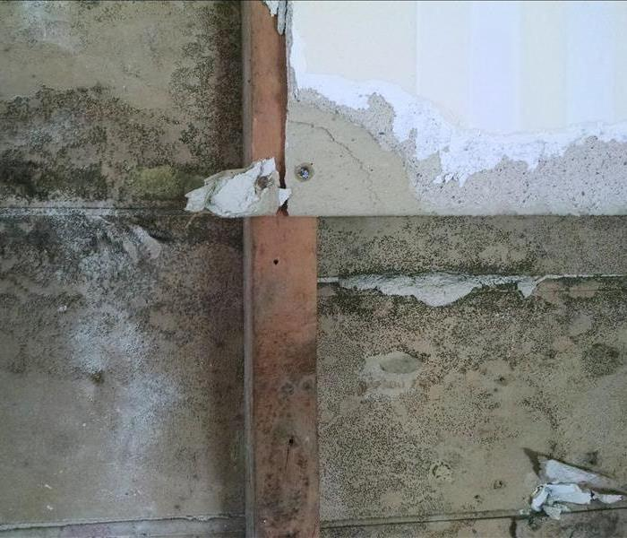 Mold Remediation Does Your Hampden County Home Have A Mold Problem?