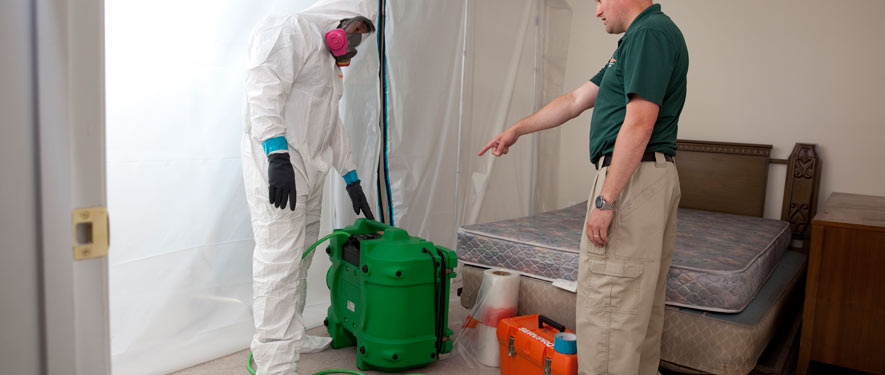 Springfield, MA mold removal process